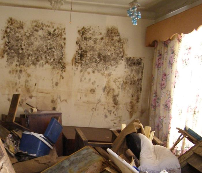 Mold Remediation Mold infestation can Happen Quickly